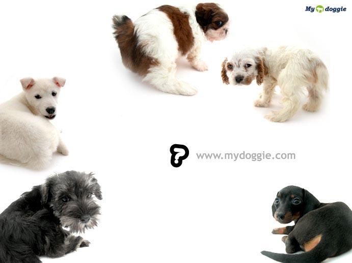 [动物世界]超级无敌可爱的小狗狗们:)